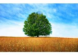106540,地球,树,树,壁纸