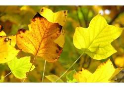 107381,地球,叶子,壁纸图片