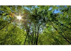102159,地球,森林,壁纸图片
