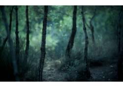 104206,地球,森林,壁纸图片
