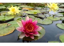 110039,地球,水,莉莉,花,花,壁纸
