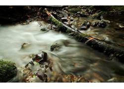 104214,地球,溪流,岩石,苔藓,落下的,岛,树,叶子,壁纸图片