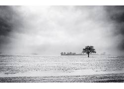 104228,地球,领域,树,云,壁纸图片
