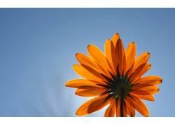 104273,地球,花,花,蓝色,天空,壁纸