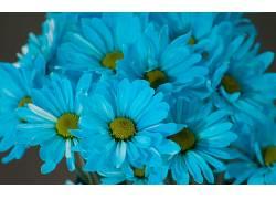 103730,地球,花,花,蓝色,壁纸