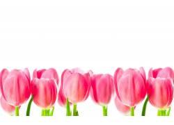 103739,地球,郁金香,花,花,壁纸