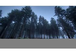 101976,地球,森林,壁纸图片