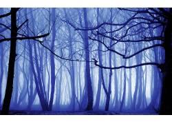 103842,地球,森林,雾,冬天的,离奇的,壁纸图片