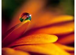 106705,地球,花,花,水,滴,壁纸图片