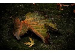 103845,地球,叶子,森林,苔藓,壁纸