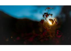 101997,地球,叶子,壁纸图片