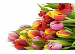 103899,地球,郁金香,花,花,壁纸图片