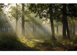 102018,地球,雾,日本,小路,树,森林,阳光,壁纸图片