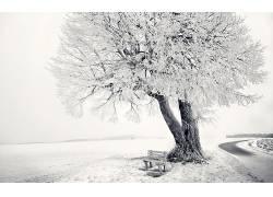 103965,地球,冬天的,领域,树,雪,风景,工作台,壁纸图片