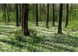 109968,地球,森林,壁纸图片