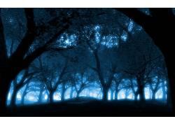 104085,地球,森林,壁纸图片