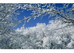 10730,地球,冬天的,树,雪,壁纸图片