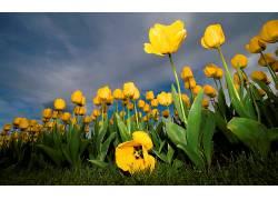 107364,地球,郁金香,花,花,壁纸图片