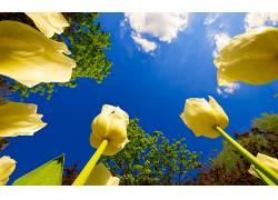 110231,地球,郁金香,花,花,壁纸图片