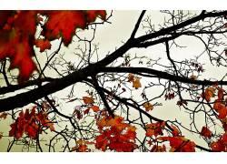 107772,地球,叶子,壁纸图片