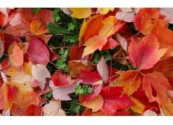 107811,地球,叶子,壁纸图片