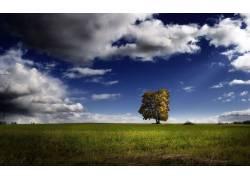 107827,地球,树,树,壁纸