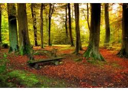 102290,地球,森林,壁纸图片