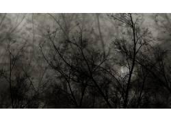 107888,地球,树,树,壁纸