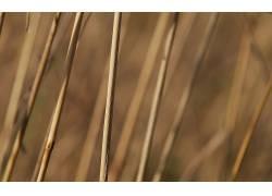 104731,地球,草,壁纸图片