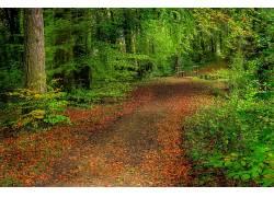 102403,地球,森林,壁纸图片