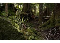 108268,地球,森林,壁纸图片