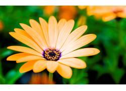102486,地球,雏菊,花,花,特写镜头,自然,黄色,花,壁纸图片