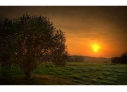 105087,地球,日落,风景,摄影,太阳,山,布什,木材,森林,草,领域,树