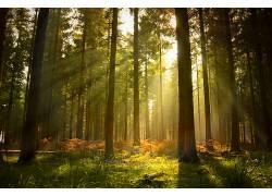 102511,地球,森林,壁纸图片