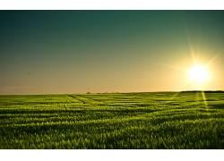105099,地球,领域,日落,大麦,明尼苏达州,壁纸图片