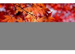 105493,地球,叶子,壁纸图片