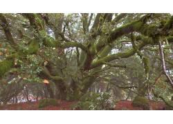 108355,地球,树,树,壁纸