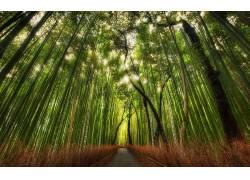 105662,地球,竹子,壁纸图片