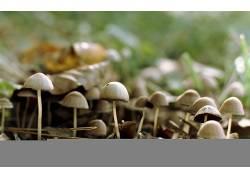 105689,地球,蘑菇,壁纸图片