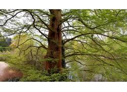108395,地球,树,树,壁纸
