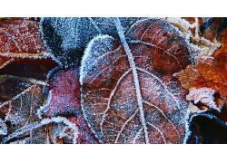 95017,地球,叶子,壁纸图片