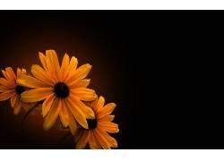 96075,地球,花,花,壁纸