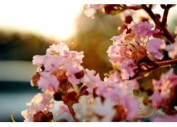 96092,地球,花,花,弹簧,蜡笔,樱花,花,樱桃,花,壁纸