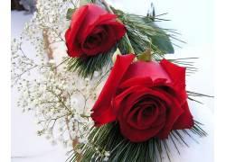 96185,地球,玫瑰,花,壁纸