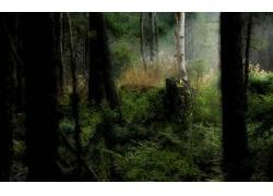 97188,地球,森林,壁纸图片