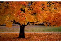 99310,地球,树,树,壁纸