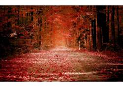 99332,地球,秋天,叶子,壁纸