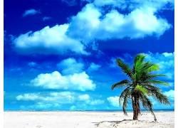 99543,地球,海滩,自然,手掌,树,热带的,云,壁纸