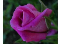 116848,地球,玫瑰,花,红色,玫瑰,花,壁纸