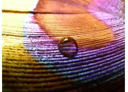 116855,地球,水,滴,爱,羽毛,紫罗兰,蓝色,棕色,壁纸